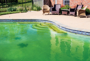 bigstock-Filthy-Backyard-Swimming-Pool--45958981