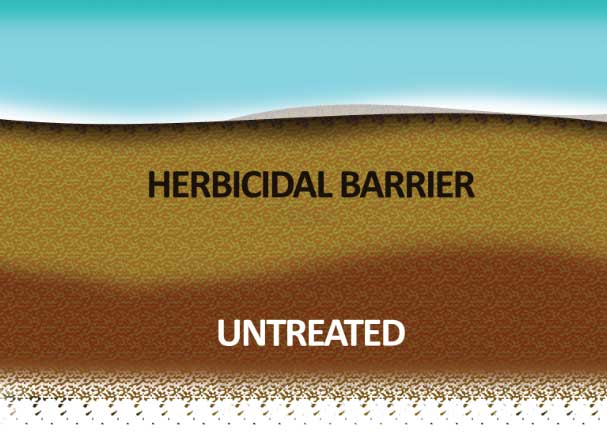 Once dichlobenil has been saturated into the soil an herbicidal barrier will form preventing new nutsedge growth. Small or young bulbs (seeds) and remaining vegetation in the herbicidal barrier will die off.