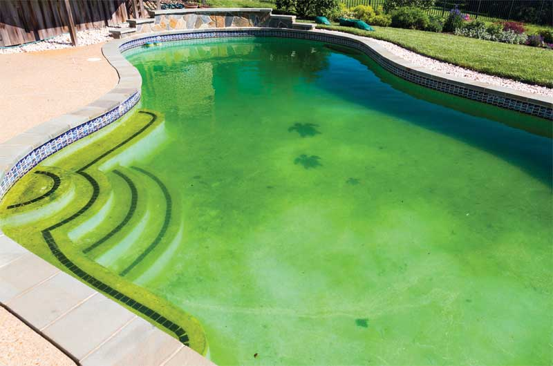 Should algae bloom in a saltwater pool, it can be treated just as it would be in a traditional chlorine pool. If the water is swampy green, a floc product can speed up the clearing process.