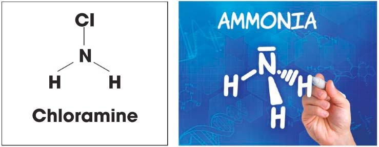 Left: Chloramines result from the combination of two ingredients: (a) chlorine disinfectants and (b) perspiration, oils, and urine that enter pools on the bodies of swimmers. Right: Many cleaners and algaecides for pools contain ammonia in one form or another.